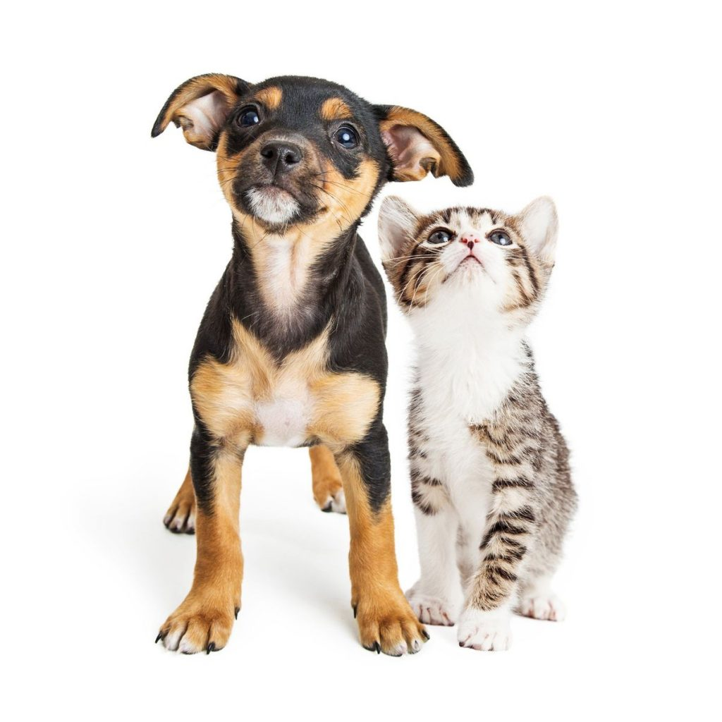 Dicas de cuidados com animais de estimação